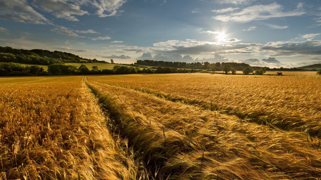 wheat-field-late-summer